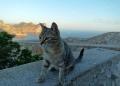 Mallorca-Cap-Formentor-Leuchtturm-Getigerte-Katze-Ausblick-Meer-120x86