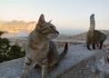 Mallorca-Cap-Formentor-Leuchtturm-Getigerte-Katze-Ausblick-Meer-2-120x86