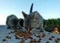 Mallorca-Cap-Formentor-Leuchtturm-Getigerte-Katze-Futter-120x86
