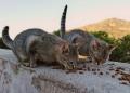 Mallorca-Cap-Formentor-Leuchtturm-Getigerte-Katze-Futter-2-120x86