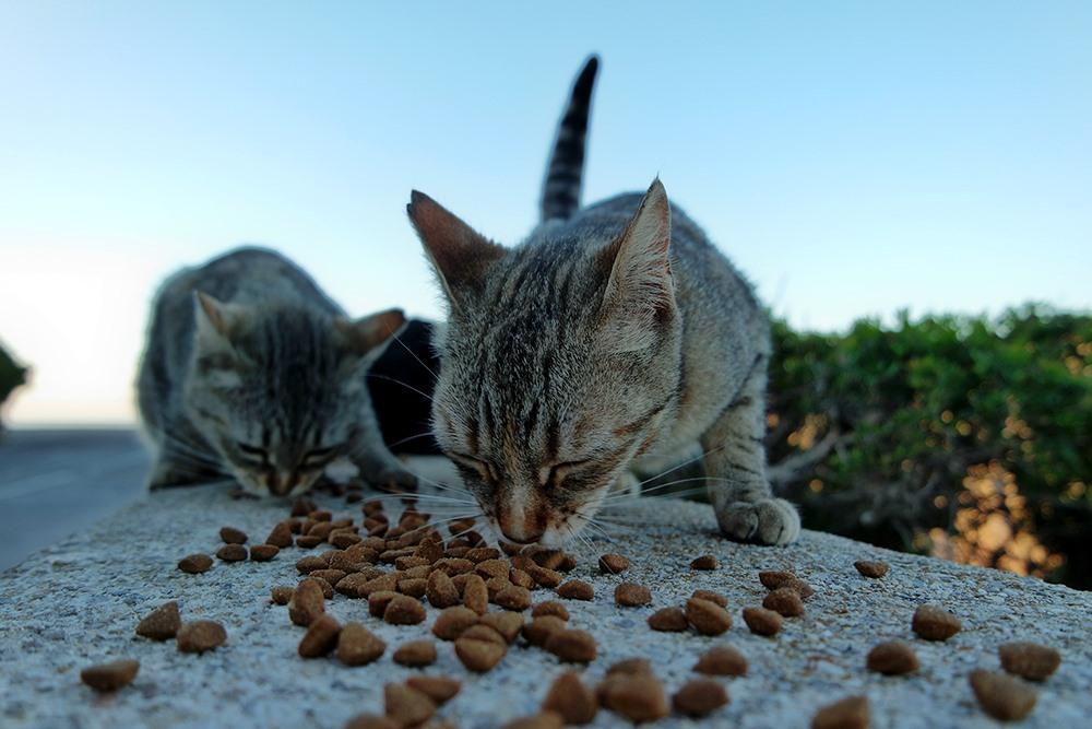 Mallorca-Cap-Formentor-Leuchtturm-Getigerte-Katze-Futter