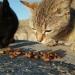 Mallorca-Cap-Formentor-Leuchtturm-Schwarze-Getigerte-Katze-Futter