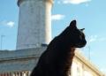 Mallorca-Cap-Formentor-Leuchtturm-Schwarze-Katze-120x86