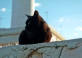 Mallorca-Cap-Formentor-Leuchtturm-Schwarze-Katze-2-120x86