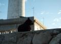 Mallorca-Cap-Formentor-Leuchtturm-Schwarze-Katze-3-120x86