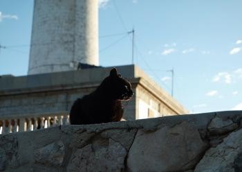 Mallorca-Cap-Formentor-Leuchtturm-Schwarze-Katze-3
