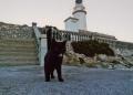 Mallorca-Cap-Formentor-Leuchtturm-Schwarze-Katze-Zunge-120x86