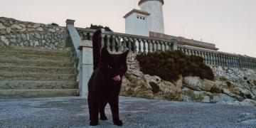 Mallorca-Cap-Formentor-Leuchtturm-Schwarze-Katze-Zunge-360x180
