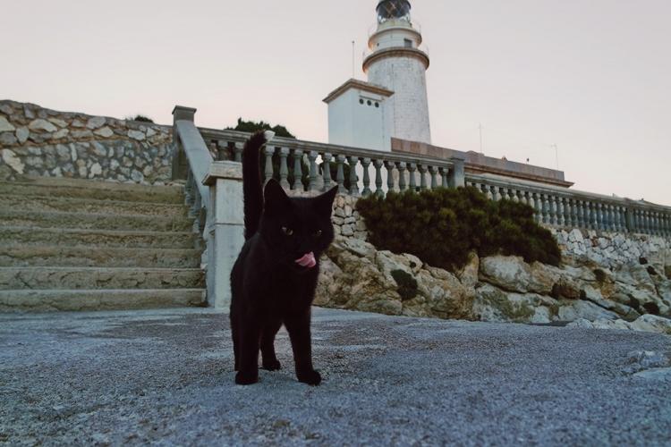 Mallorca-Cap-Formentor-Leuchtturm-Schwarze-Katze-Zunge