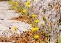 Mallorca-Ermita-de-la-Trinitat-Blumen-120x86