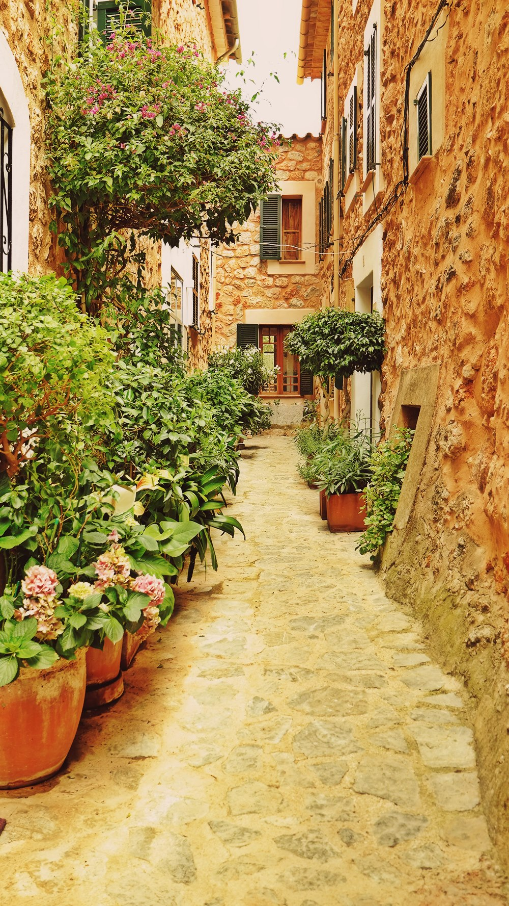 Mallorca-Fornalutx-Gasse-Hinterhof-Pflanzen