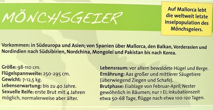Moenchsgeier-Mallorca-4-750x386