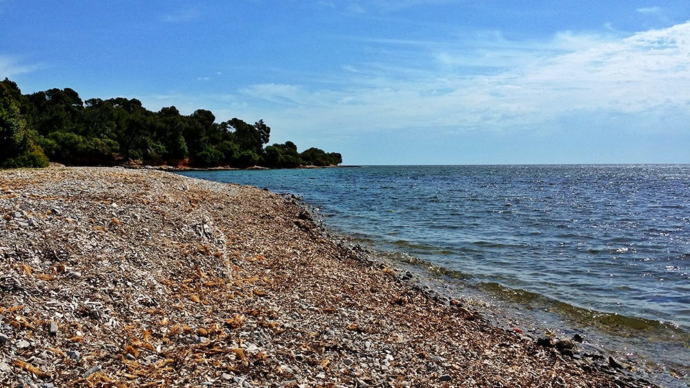 Mallorca-Alcanada-Strand-Baeume-Schatten-Algen