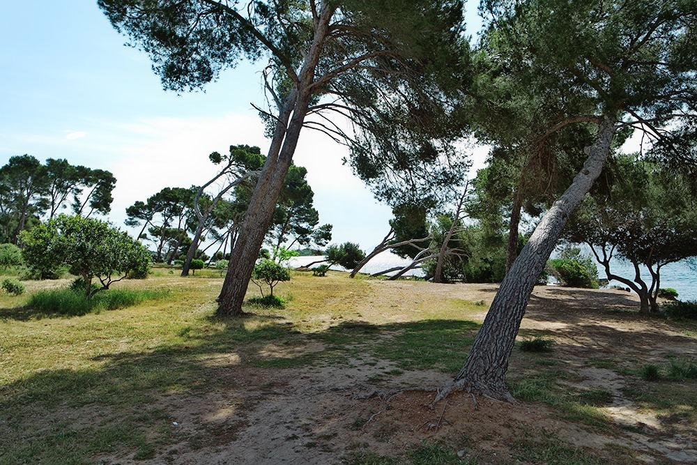 Mallorca-Alcanada-Strand-Baeume-Schatten