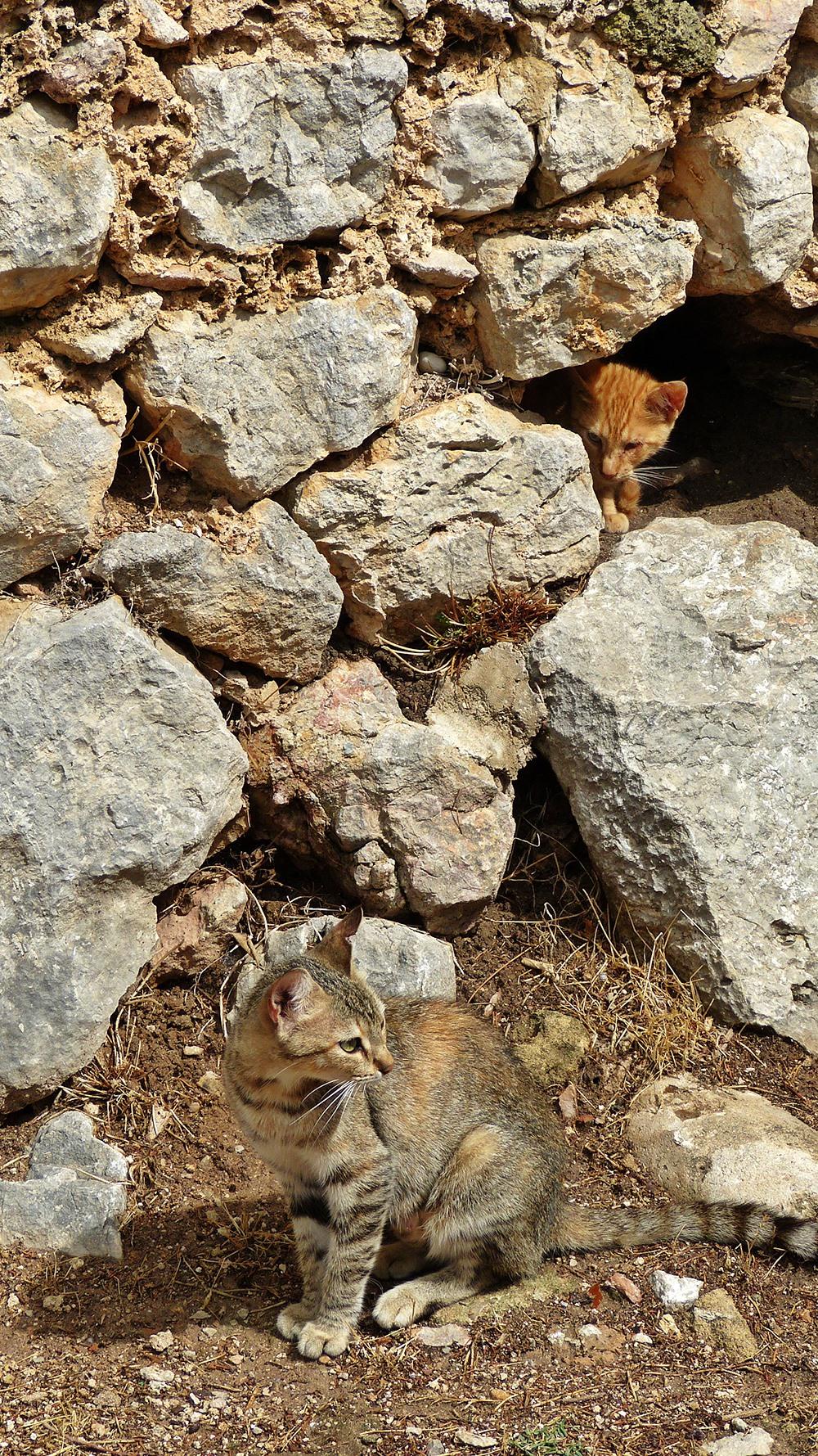 Mallorca-Puig-de-Maria-Wanderung-Kloster-Katzen-versteckt