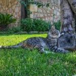 Mallorca Katze Finca