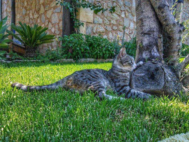 Mallorca-Katze-Finca