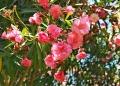 Mallorca-Palma-Marivent-Gaerten-Blumen-120x86
