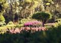Mallorca-Palma-Marivent-Gaerten-Blumen-3-120x86