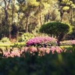 Mallorca-Palma-Marivent-Gaerten-Blumen-3