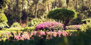 Mallorca-Palma-Marivent-Gaerten-Blumen-3-360x180