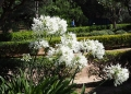 Mallorca-Palma-Marivent-Gaerten-Blumen-4-120x86