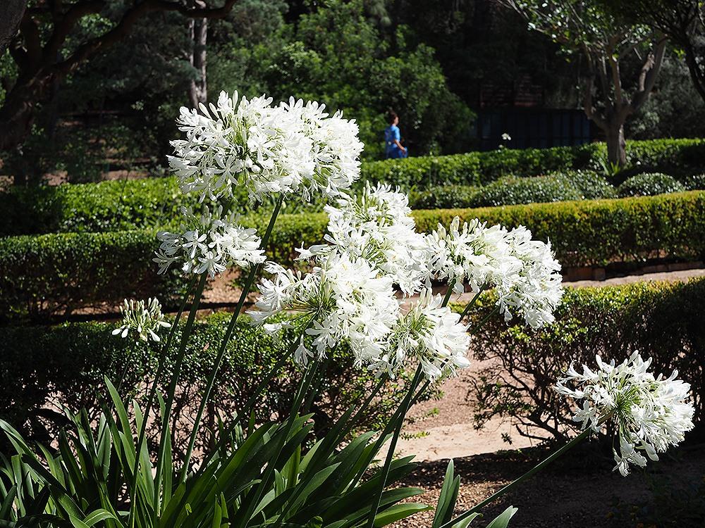 Mallorca-Palma-Marivent-Gaerten-Blumen-4