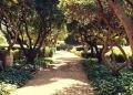 Mallorca-Palma-Marivent-Gaerten-Weg-Baeume-120x86