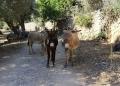 Mallorca-Sa-Foradada-Wanderung-Esel-Weg-2-120x86