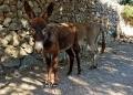 Mallorca-Sa-Foradada-Wanderung-Esel-Weg-4-120x86