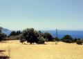 Mallorca-Sa-Foradada-Wanderung-Feld-Ausblick-120x86