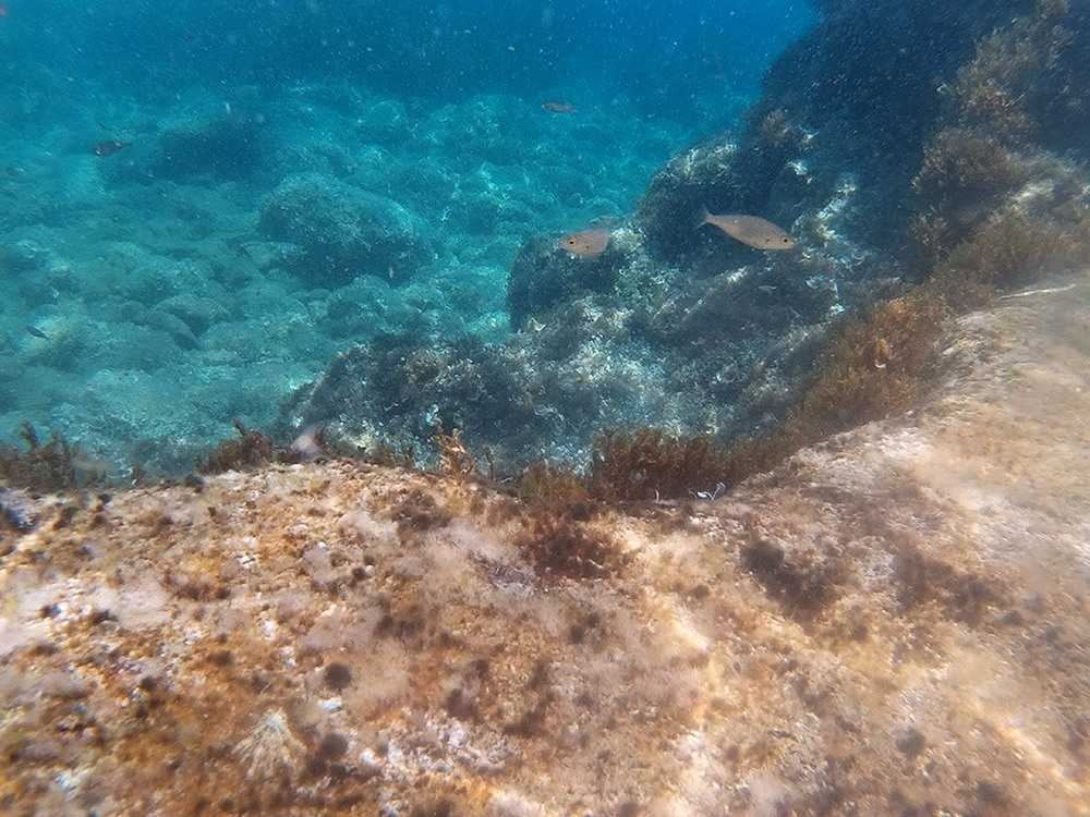 Mallorca-Sa-Foradada-Wanderung-Unterwasser-Meer