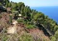 Mallorca-Sa-Foradada-Wanderung-Weg-Baeume-120x86