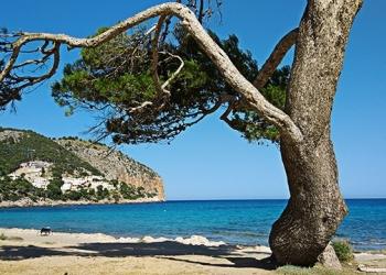 Mallorca-Strandfueher-Canyamel-Baum