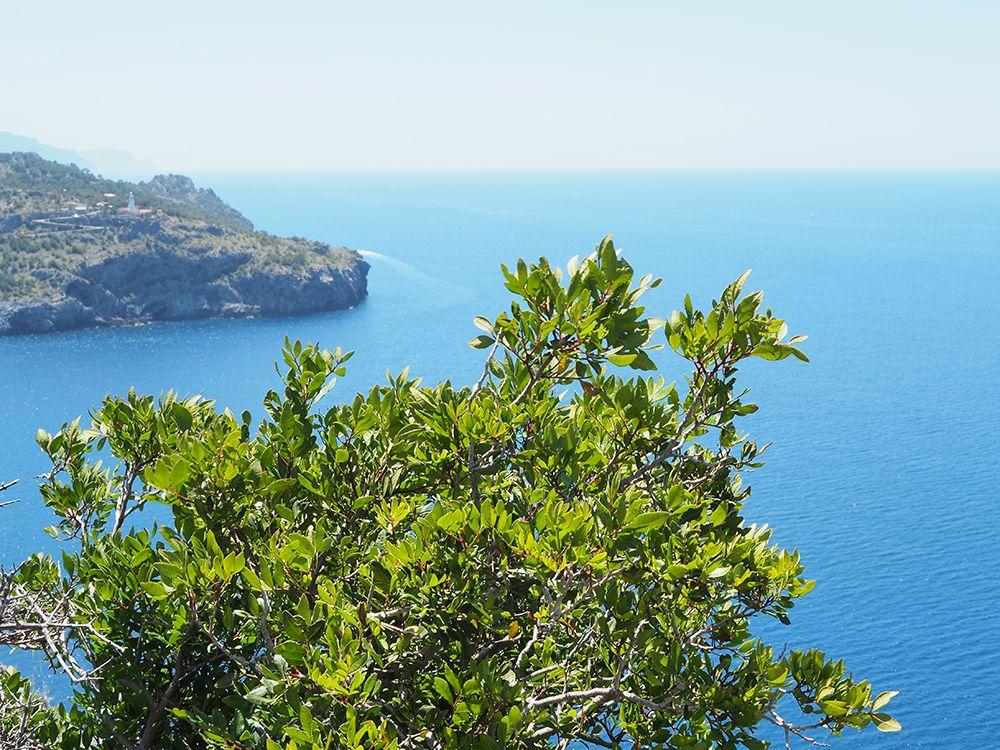 Mallorca-Port-de-Soller-Torre-Picada-Wanderung-Ausblick-Far-del-Cap-Gros-Meer-2