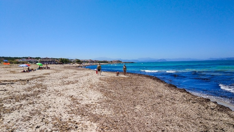 Mallorca-Strand-Son-Serra-de-Marina-Meer-Algen-750x422