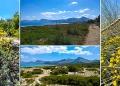 Mallorca-Strand-Son-Serra-de-Marina-Vegetation-Duenen-2-120x86