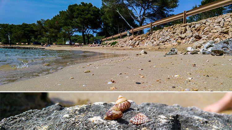 Arenal-des-Ases-Portocolom-Strand-Muscheln