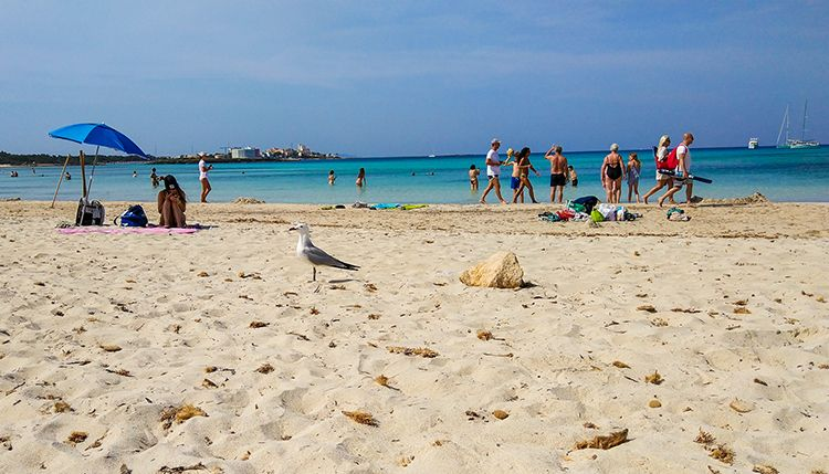 Mallorca-Es-Trenc-Strand-Karibik-Meer-Sand-Moewe