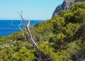 Mallorca-Sant-Elm-Wandern-Torre-de-Cala-en-Basset-10-120x86