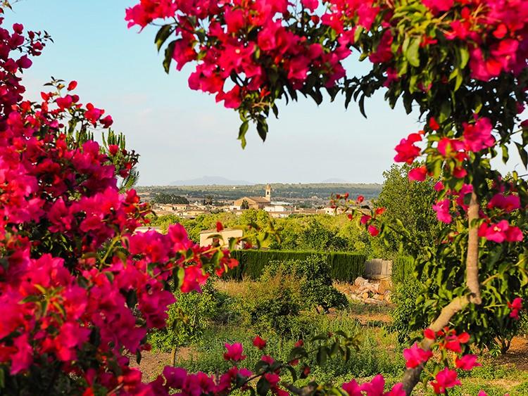 Mallorca-Petra-3