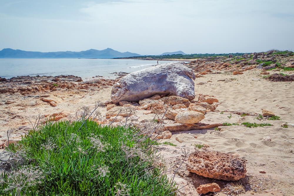 Mallorca-Son-Baulo-Strand-2