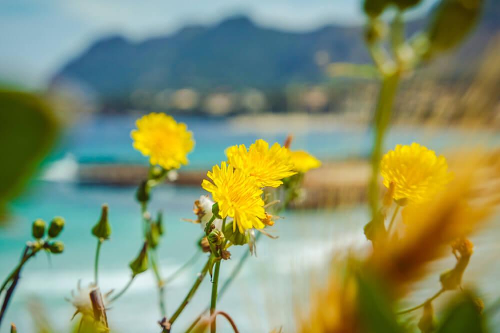 Mallorca-Strand-Playa-de-Sant-Joan-Alcudia-5