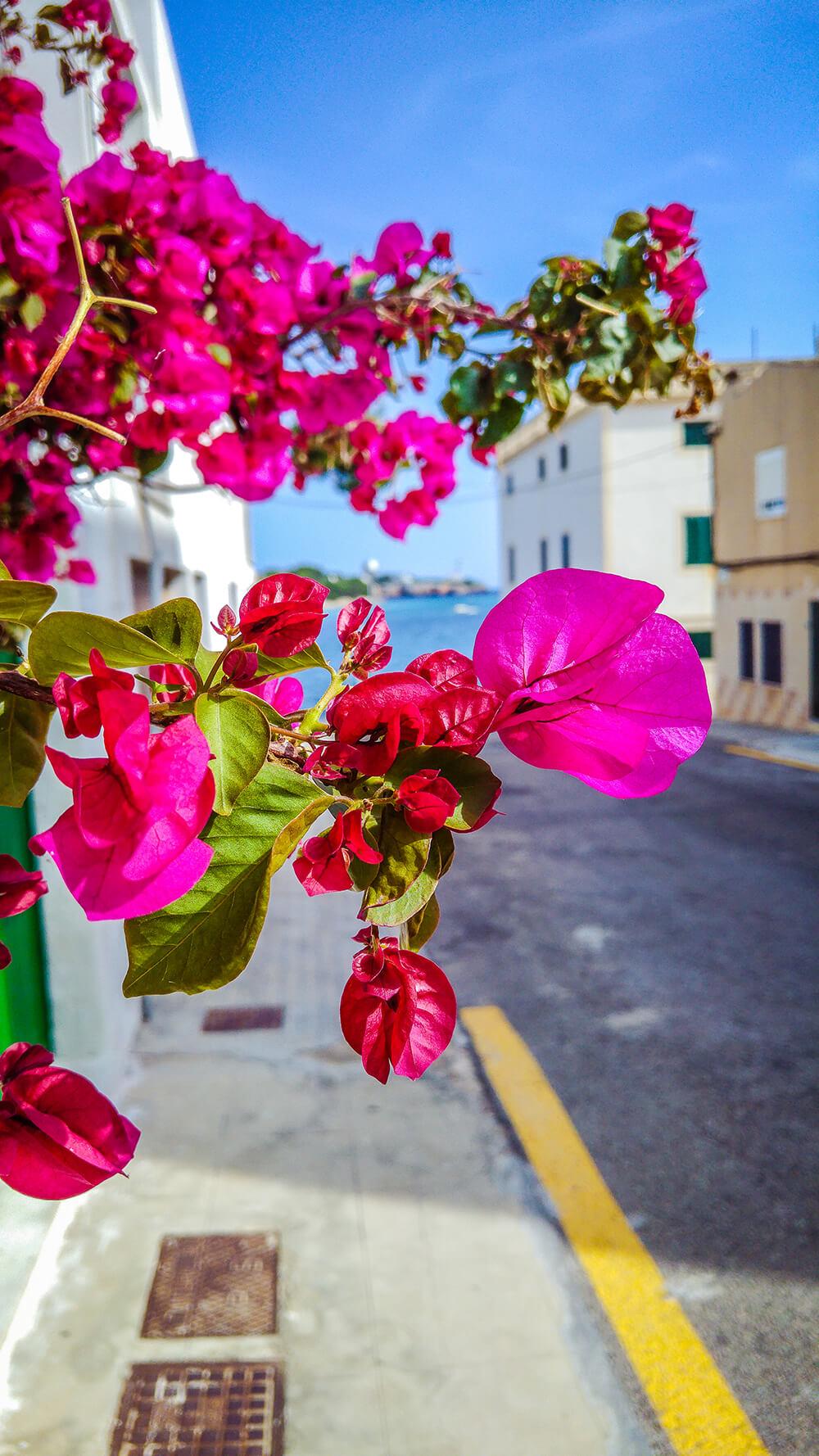 Mallorca-Portocolom-9