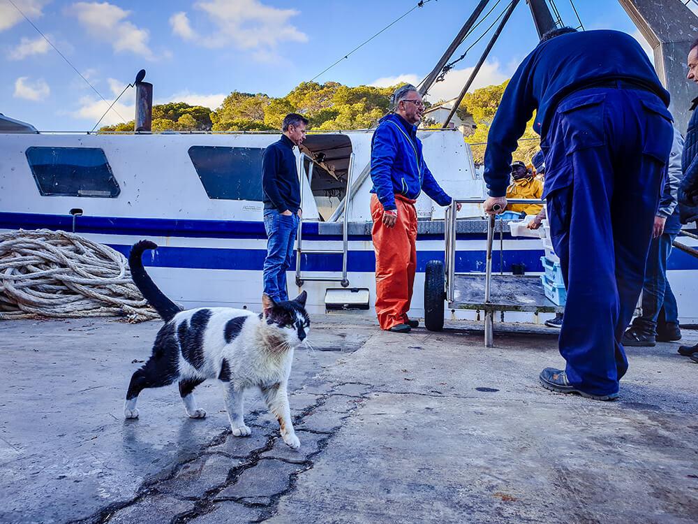 Mallorca-Cala-Figuera-Winter-Hafen-Katze-Fischfang