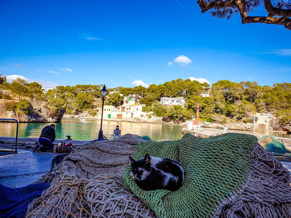Mallorca-Cala-Figuera-Winter-Katze-Hafen