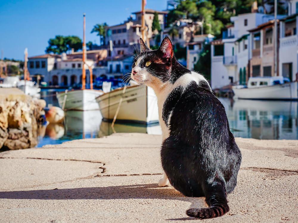 Mallorca-Cala-Figuera-Winter-Katze
