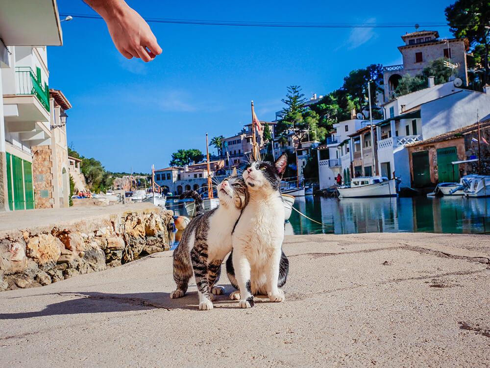 Mallorca-Cala-Figuera-Winter-Katzen