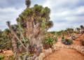 Mallorca-Botanicactus-20-120x86