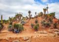 Mallorca-Botanicactus-21-120x86